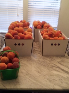 Peaches - lots and lots of peaches!