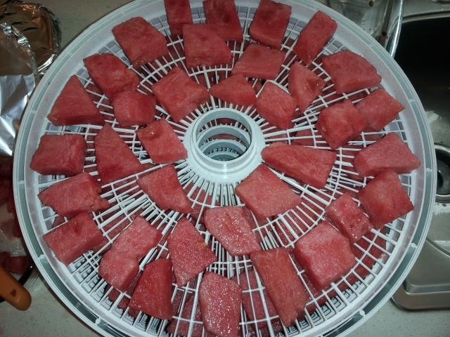 Watermelon chunks ready for the dehydrator
