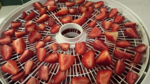 Strawberries in the dehydrator - a wonderful thing indeed!
